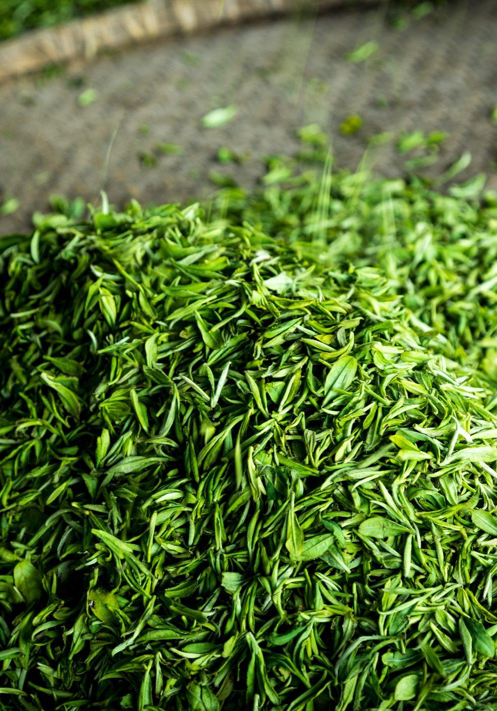 Green tea in a flat round split bamboo basket at Meijiawu of Hangzhou.